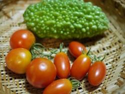 8月18日収穫物