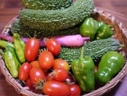 8月26日収穫物
