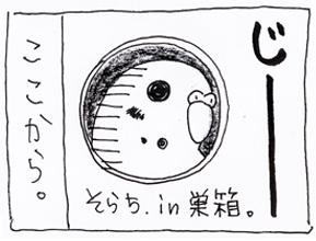 koma-kasei4.jpg