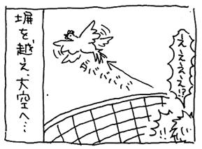 koma-niwa4.jpg