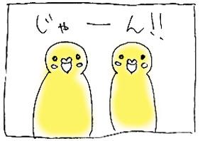 koma-popi3.jpg