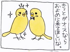 koma-toko2.jpg