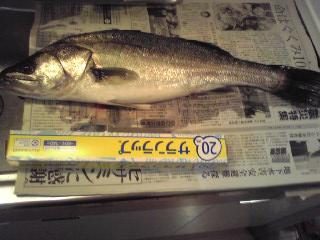 2010 4/19 57cm