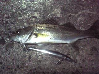 2010 6/21 セイゴ