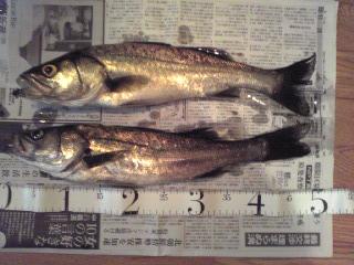 2010 7/10 49cm&47cm
