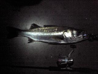 2010 7/23 63cm
