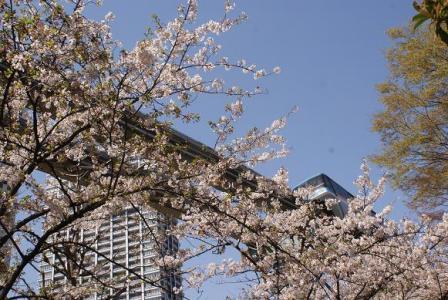 桜並木とモノレール