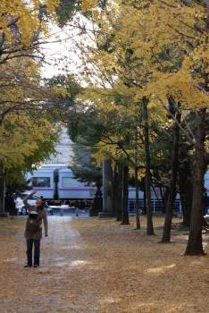 銀杏と京成