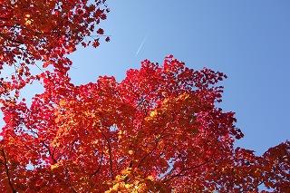2014年10月紅葉と飛行機雲