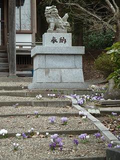 クロッカス三吉神社その2