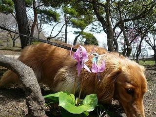 片栗の花とてつや