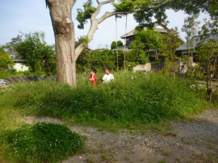 生い茂る雑草