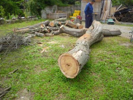 欅伐採:切り落とされた上の方の枝(幹?)
