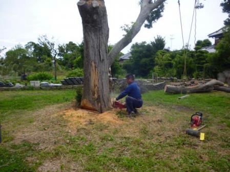 欅伐採:反対側から