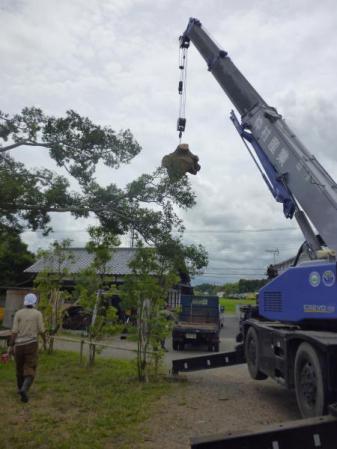 欅伐採:荷台へと運ばれる欅