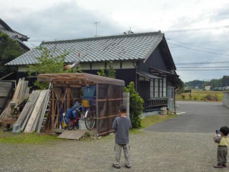 自転車小屋の上のカンムリヅル