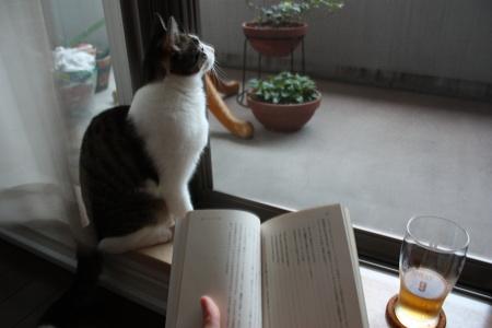 猫とビールと文庫本