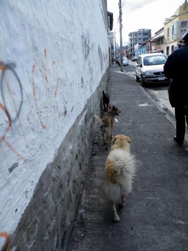 世界の犬 世界の猫