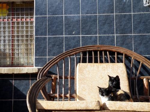 南米 犬 猫