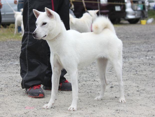 019【花乃香号】紀ノ川荘(快雲×桃香) 中型雌部若犬一組