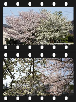 20110412_2.jpg