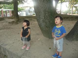 2010 09 09 どんぐり2 tibi01