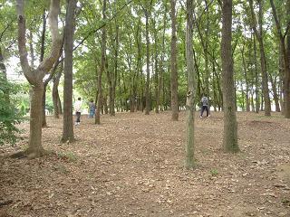 2010 10 24 大泉緑地公園 tibi02