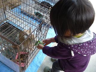 2010 10 27 バンビ&アトリエ tibi09