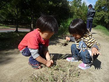 2010 11 03 久宝寺緑地 tibi05