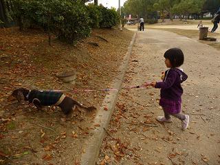 2010 11 14 久宝寺緑地 tibi05