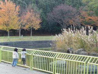 2010 11 27 植物園4 tibi01