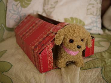 2011 01 30 モモ2歳5ヵ月 tibi10