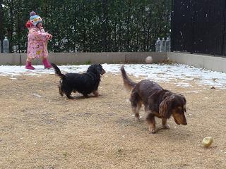 2011 02 11 雪遊び3 tibi01