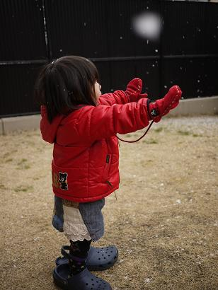 2011 02 14 いちご狩り2 tibi01