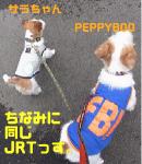 jp77p