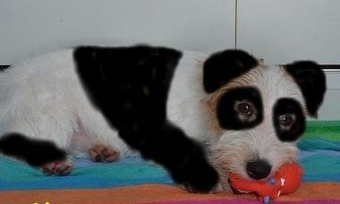 pandap.jpg