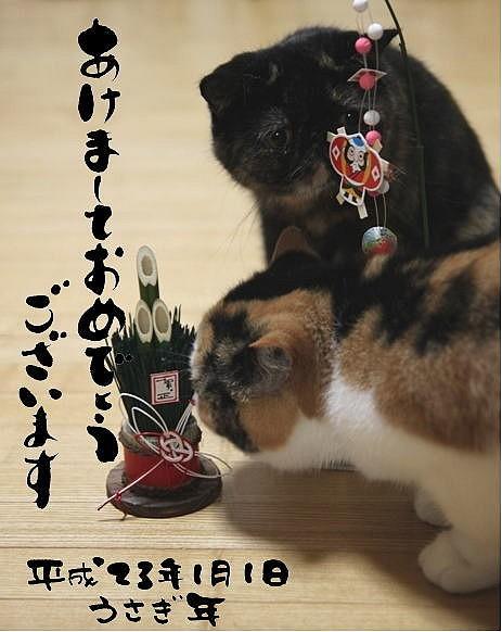 image2011-01.jpg