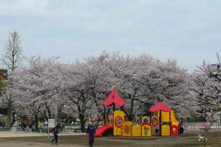 桜♪満開パートⅡ