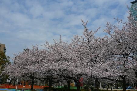 春ルンルン