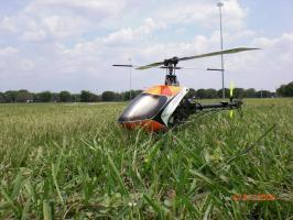 flypic1.jpg