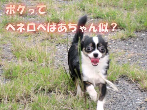 13_20120521124304.jpg