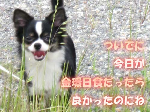 15_20120521124303.jpg
