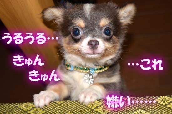 3_20121027184002.jpg