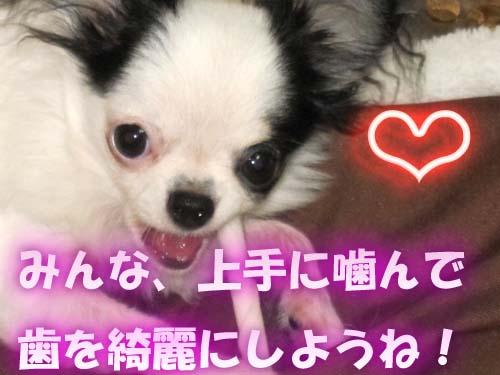 9_20120419134538.jpg