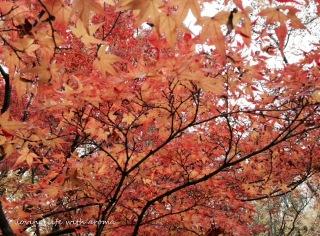autumn2013_3-001.jpg