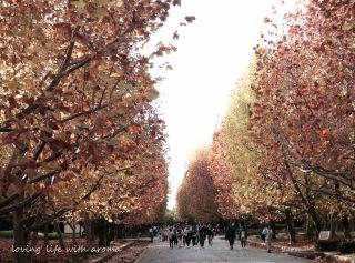 autumn2013_4-001.jpg