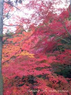 autumn2013_5-001.jpg
