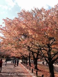 autumn2013_6-001.jpg