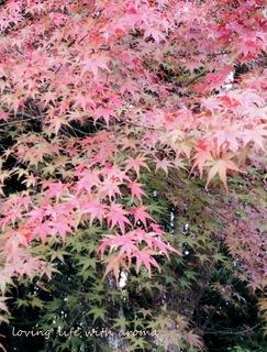 autumn2013_9-001.jpg