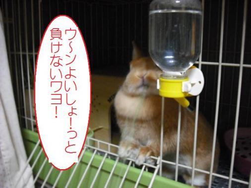 001_20110912094434.jpg
